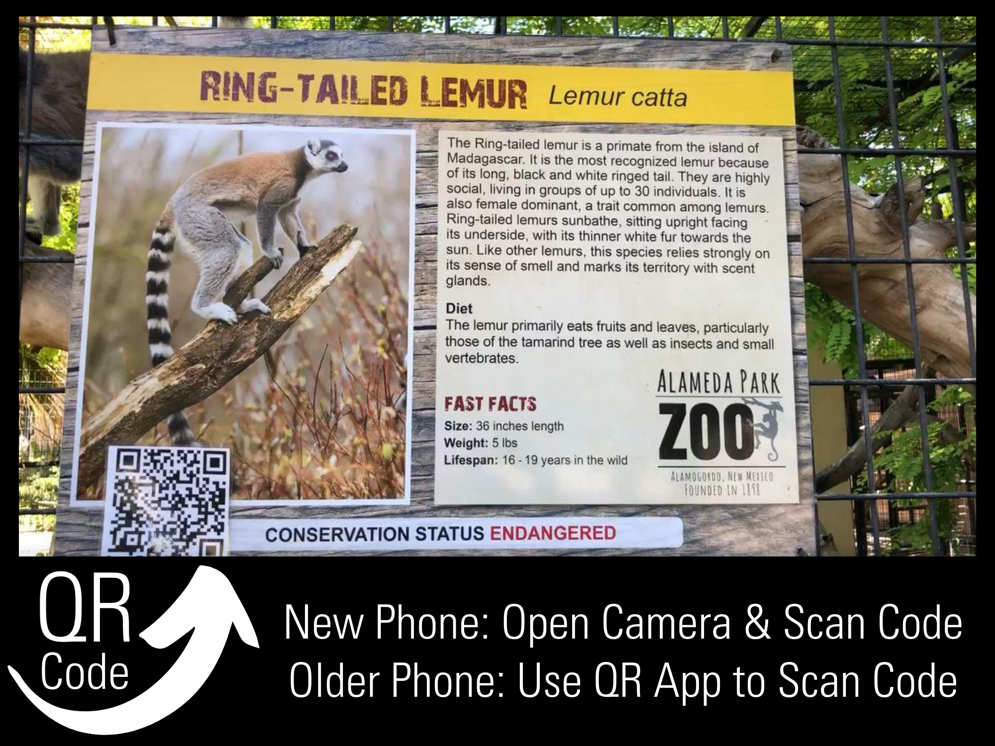 QR Codes At Zoo