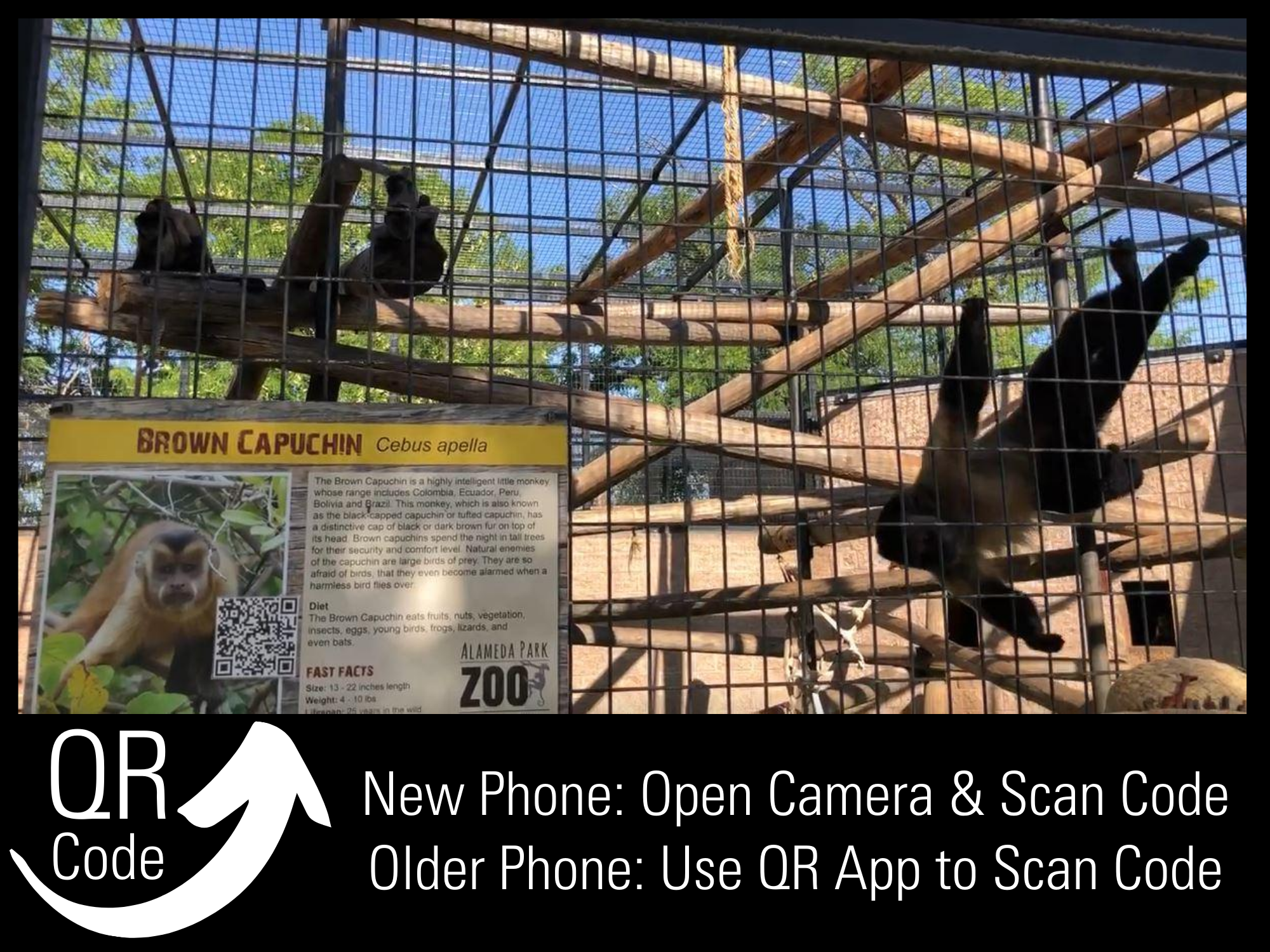 QR Code Zoo - Monkeys